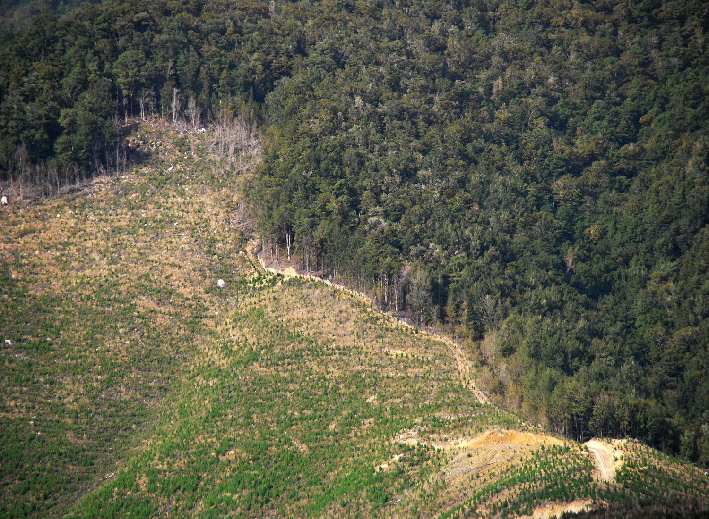 Les arbres, une arme contre le réchauffement climatique